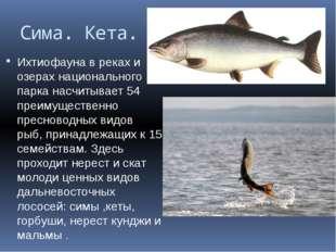 Сима. Кета. Ихтиофауна в реках и озерах национального парка насчитывает 54 пр