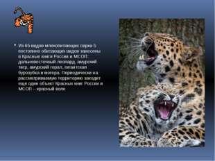 Из 65 видов млекопитающих парка 5 постоянно обитающих видов занесены в Красн