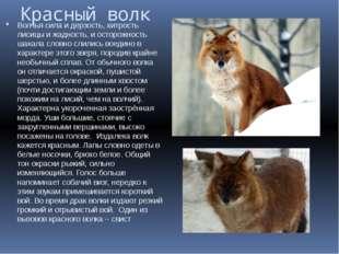Красный волк Волчья сила и дерзость, хитрость лисицы и жадность, и осторожнос