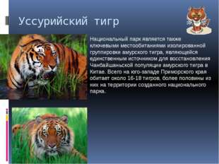 Уссурийский тигр Национальный парк является также ключевыми местообитаниями и