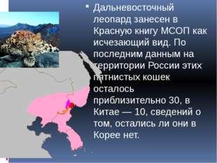 Дальневосточный леопард занесен в Красную книгу МСОП как исчезающий вид. По