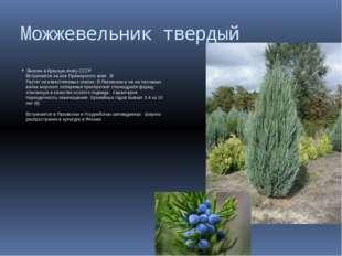 Можжевельник твердый Внесен в Красную книгу СССР Встречается на юге Приморско