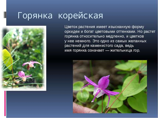 Горянка корейская Цветок растения имеет изысканную форму орхидеи ибогат цвет...