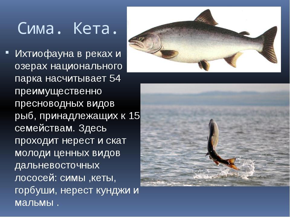 Сима. Кета. Ихтиофауна в реках и озерах национального парка насчитывает 54 пр...