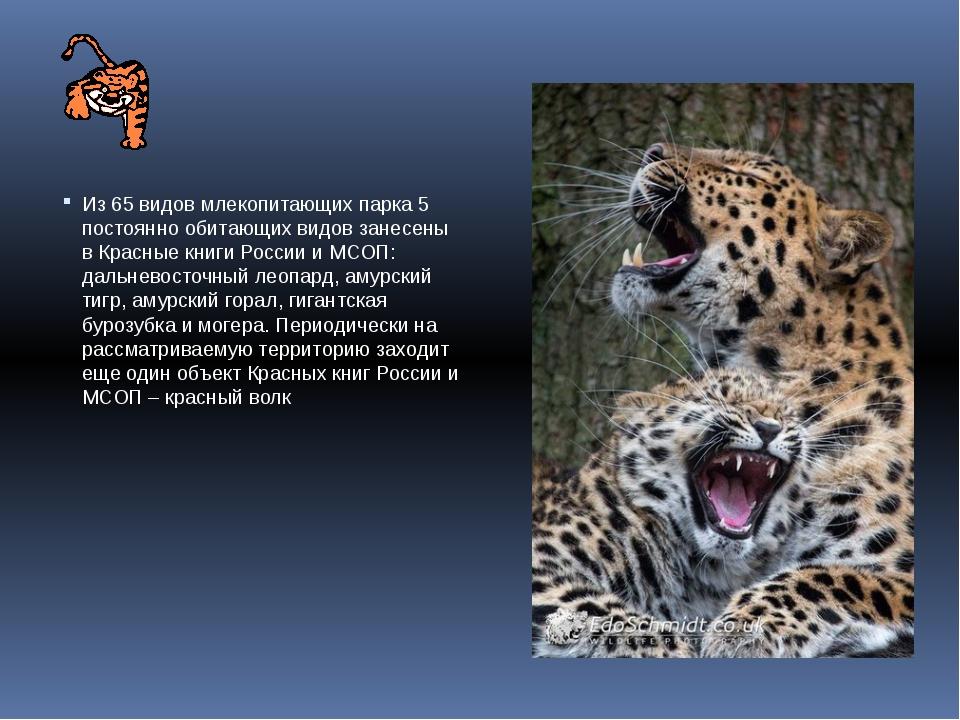 Из 65 видов млекопитающих парка 5 постоянно обитающих видов занесены в Красн...