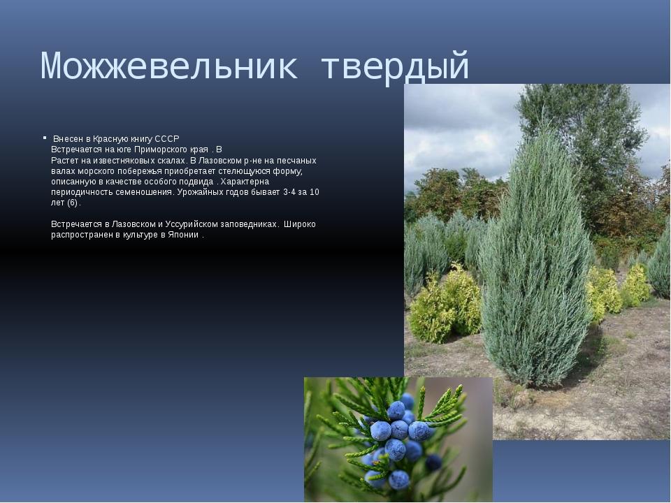 Можжевельник твердый Внесен в Красную книгу СССР Встречается на юге Приморско...