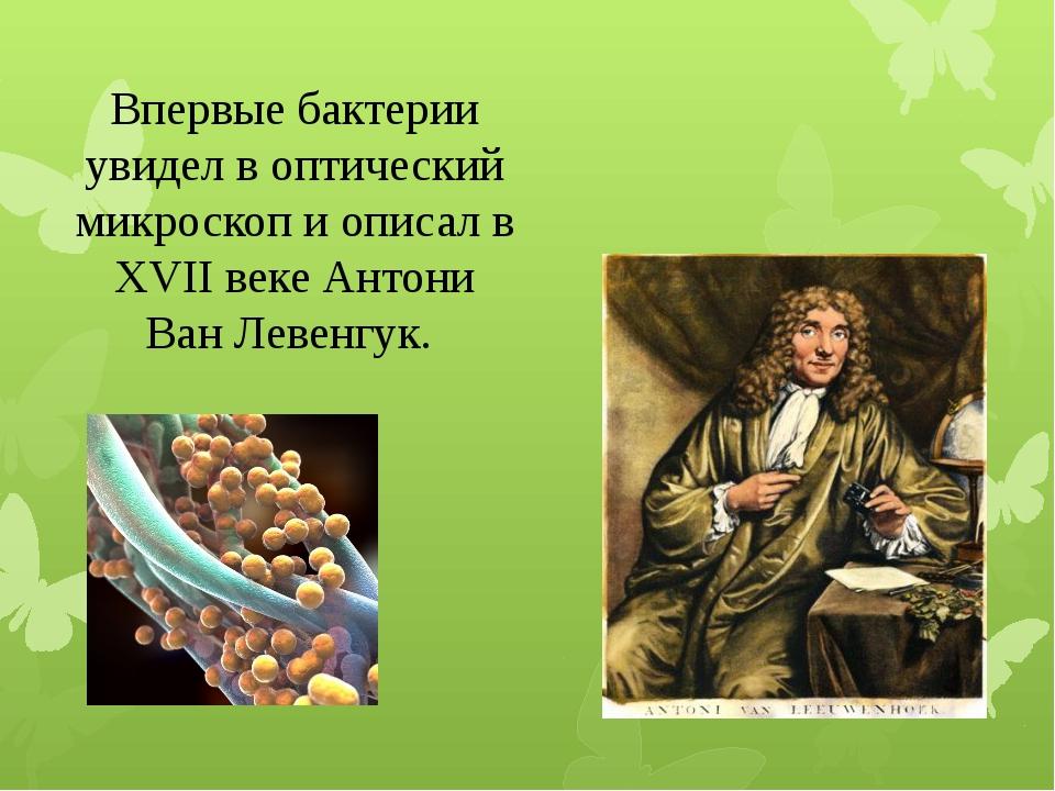 Впервые бактерии увидел в оптический микроскоп и описал в XVII веке Антони Ва...