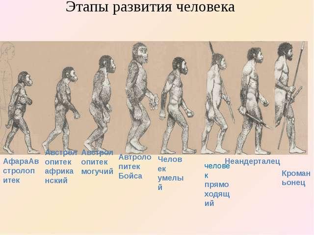 Кроманьонец Неандерталец человек прямоходящий АфараАвстролопитек Австролопит...