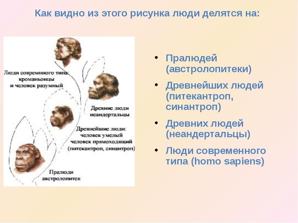 Пралюдей (австролопитеки) Древнейших людей (питекантроп, синантроп) Древних...