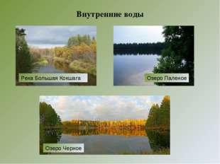 Внутренние воды Озеро Черное Озеро Паленое Река Большая Кокшага