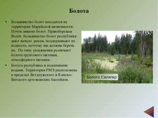 Болота Большинство болот находятся на территории Марийской низменности. Почти
