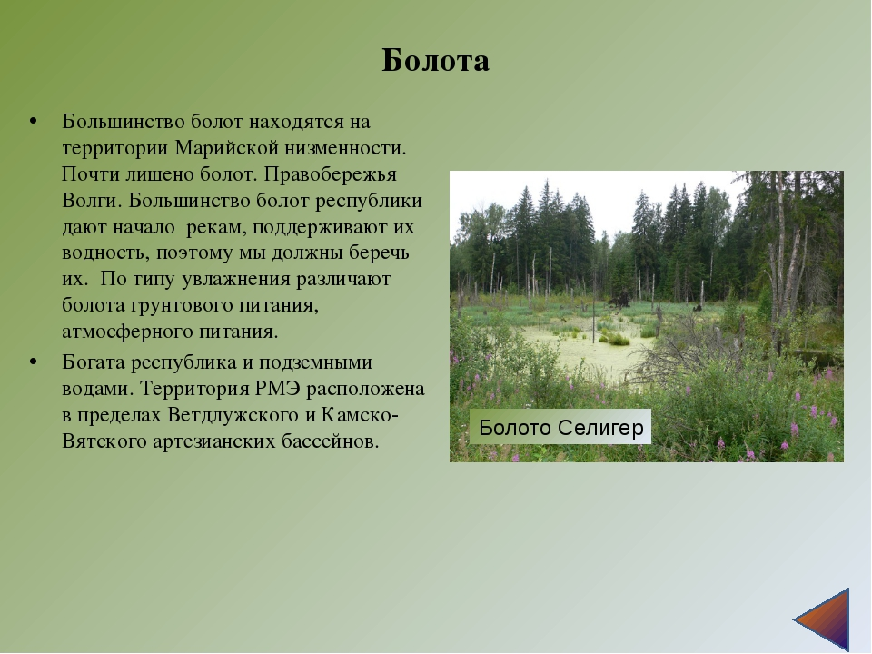 Болота Большинство болот находятся на территории Марийской низменности. Почти...