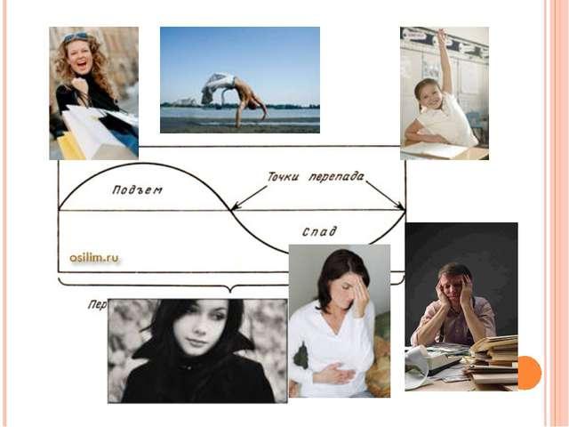 Первая половина каждого цикла начинается с «плюса». Это период развития, под...