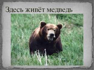 Здесь живёт медведь