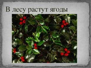 В лесу растут ягоды