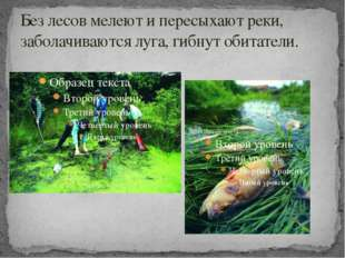 Без лесов мелеют и пересыхают реки, заболачиваются луга, гибнут обитатели.