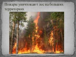 Пожары уничтожают лес на больших территориях