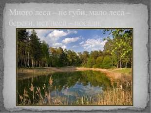 Много леса – не губи, мало леса – береги, нет леса – посади.