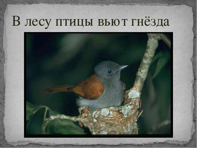 В лесу птицы вьют гнёзда