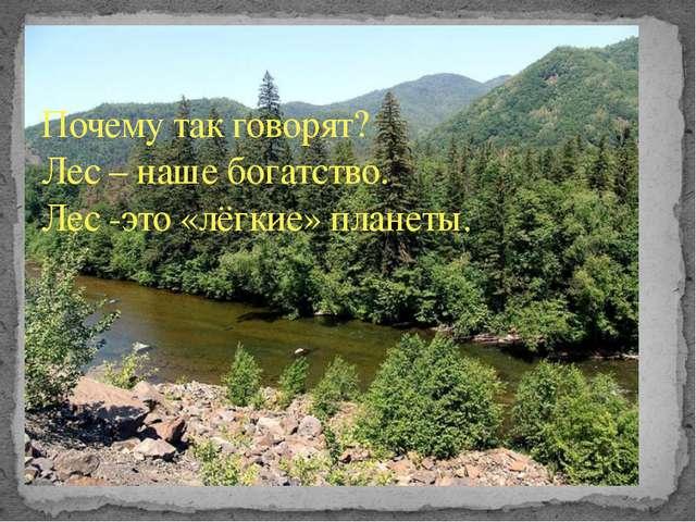Почему так говорят? Лес – наше богатство. Лес -это «лёгкие» планеты.