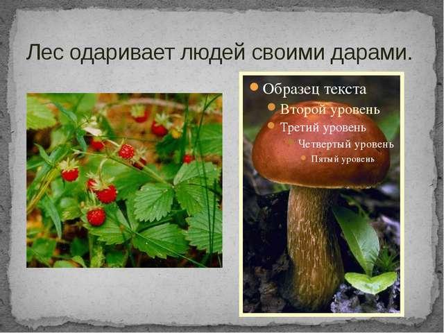 Лес одаривает людей своими дарами.