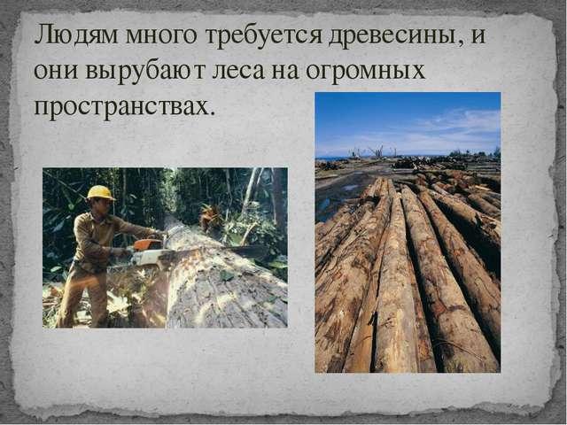 Людям много требуется древесины, и они вырубают леса на огромных пространствах.