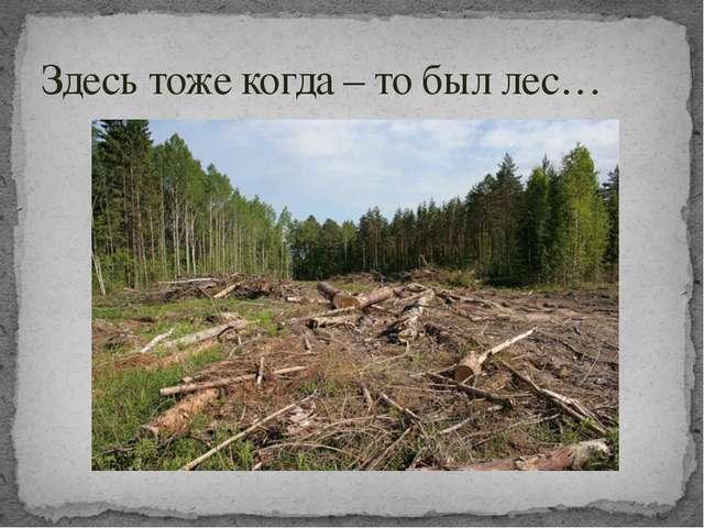 Здесь тоже когда – то был лес…