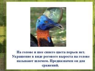 На голове и шее синего цвета перьев нет. Украшение в виде рогового выроста на