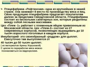 Птицефабрика «Рефтинская» одна из крупнейших в нашей стране. Она занимает 8 м