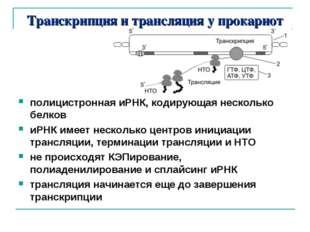 Транскрипция и трансляция у прокариот полицистронная иРНК, кодирующая несколь
