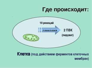 2 ПВК Клетка (под действием ферментов клеточных мембран) 10 реакций (пируват)