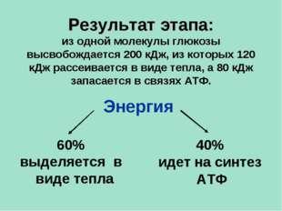 60% выделяется в виде тепла 40% идет на синтез АТФ Энергия Результат этапа: и