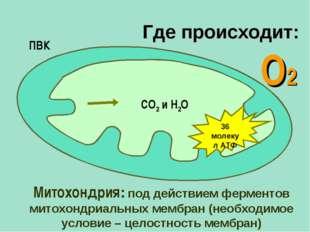 О2 Митохондрия: под действием ферментов митохондриальных мембран (необходимое