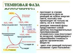 ТЕМНОВАЯ ФАЗА ФОТОСИНТЕЗА протекает в строме хлоропласта (для ее реакций не н