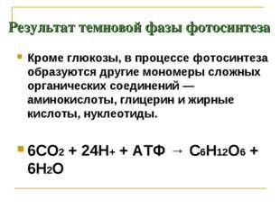Результат темновой фазы фотосинтеза Кроме глюкозы, в процессе фотосинтеза обр