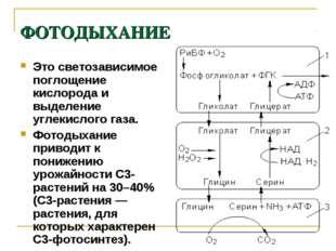 ФОТОДЫХАНИЕ Это светозависимое поглощение кислорода и выделение углекислого г