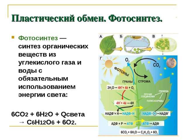 Пластический обмен. Фотосинтез. Фотосинтез — синтез органических веществ из у...