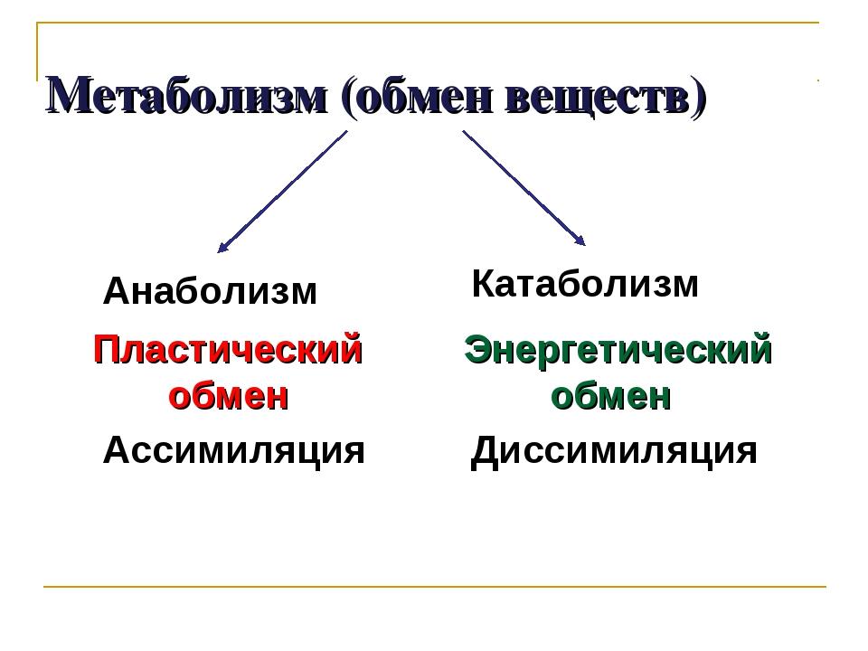 Метаболизм (обмен веществ) Пластический обмен Ассимиляция Анаболизм Энергети...