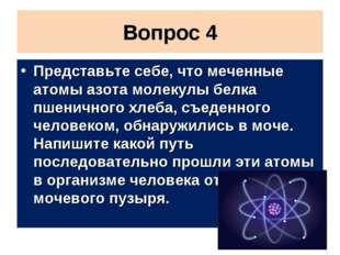 Вопрос 4 Представьте себе, что меченные атомы азота молекулы белка пшеничного