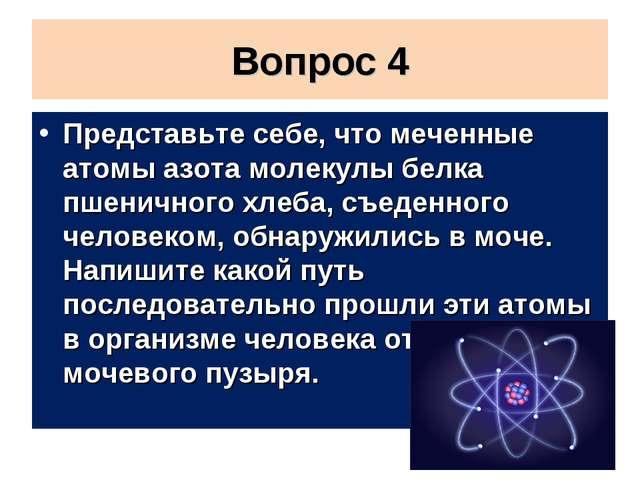 Вопрос 4 Представьте себе, что меченные атомы азота молекулы белка пшеничного...