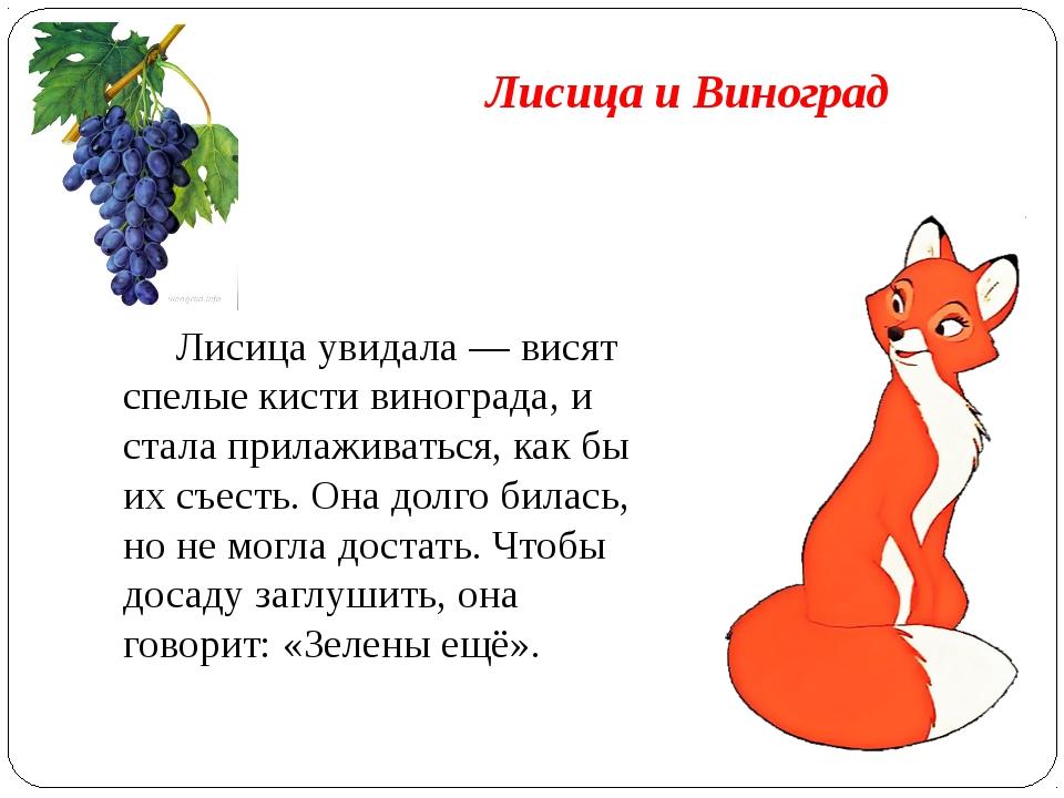 Лисица и Виноград Лисица увидала — висят спелые кисти винограда, и стала при...