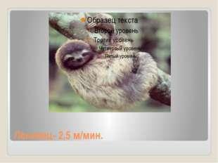 Ленивец- 2,5 м/мин.