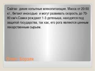 Ответ: Борзая Сайгак- дикие копытные млекопитающие. Масса от 20-50 кг., бегаю