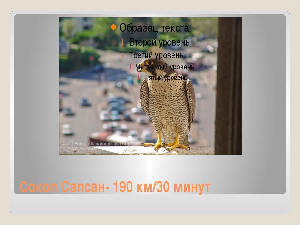 Сокол Сапсан- 190 км/30 минут