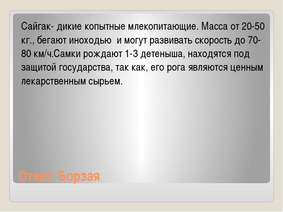 Ответ: Борзая Сайгак- дикие копытные млекопитающие. Масса от 20-50 кг., бегаю...