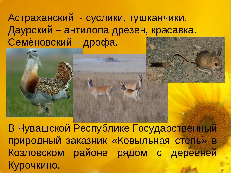 Астраханский - суслики, тушканчики. Даурский – антилопа дрезен, красавка. Се...