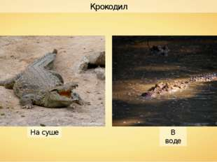 Крокодил В воде На суше Norbert Nagel Gregg Yan