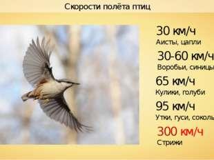 Скорости полёта птиц 300 км/ч Стрижи 30-60 км/ч Воробьи, синицы 30 км/ч Аисты