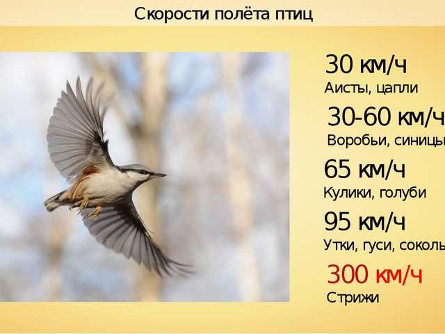 Сколько длится сон у птиц