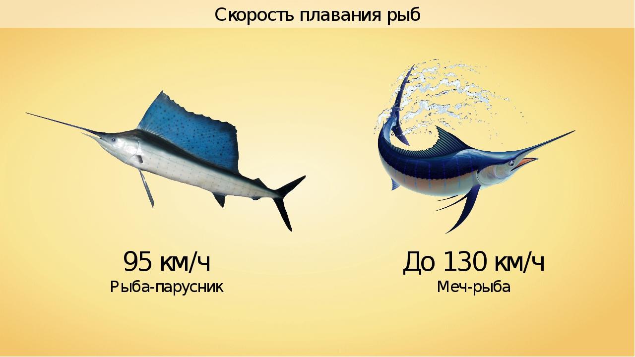 Скорость плавания рыб 95 км/ч Рыба-парусник До 130 км/ч Меч-рыба
